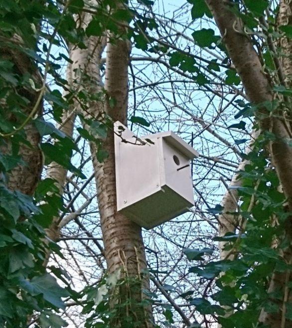 Bird box scheme