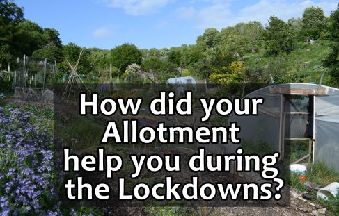 Did your allotment help you during the lockdowns?