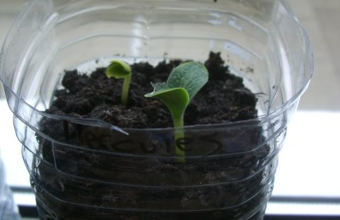 How to make a plastic bottle propagator