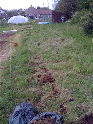 My new allotment 43/2 St Louie Portslade!