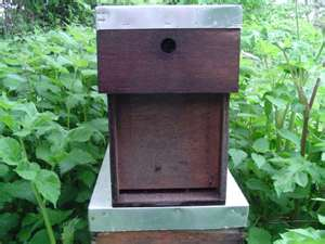 Buying Bees (Nuc Boxes)