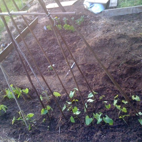 First photos of my first allotment!