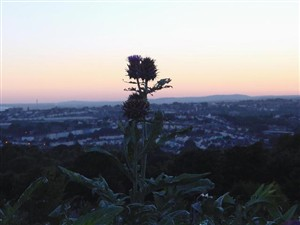Artichoke, view of Round Hill | Simon Tobitt