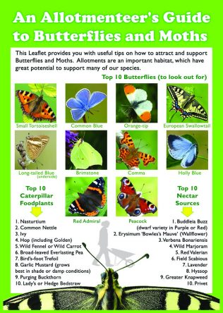 Butterflies and Moths Conservation