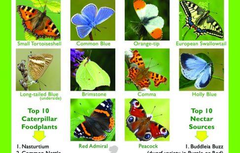 Butterflies and Moths Conservation