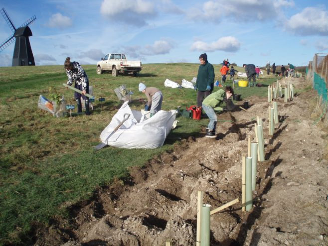 Rottindean site got funding for a hedge to act as a windbreak for the site