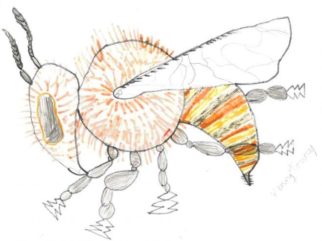Honey Bee | Henry Touray