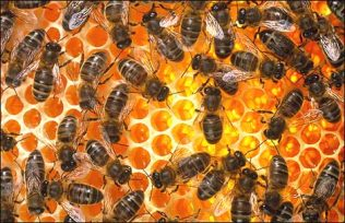 Dealing with concerns about bees on your plot