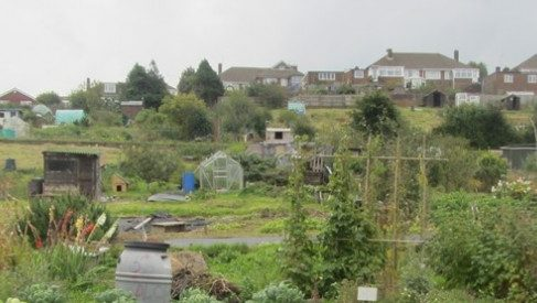 Moulsecoomb Allotment and Horticultural Society