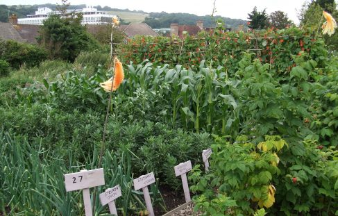 Allotment Competition 2012 results