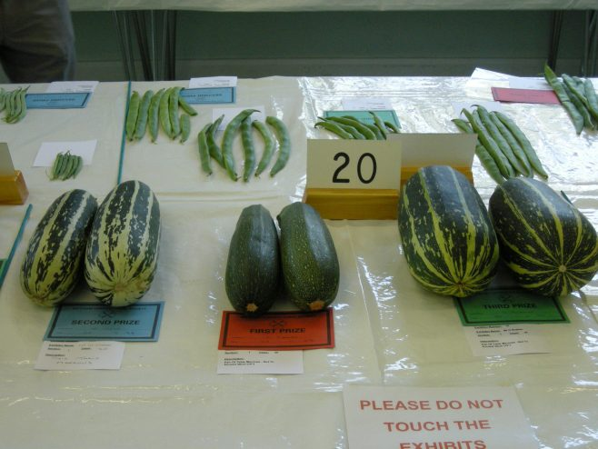 Entries for Marrows | PHS member