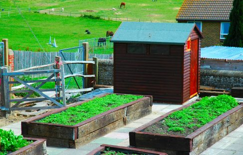 Allotments for gardeners with disabilities