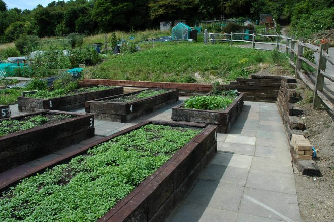 View of Foredown raised beds