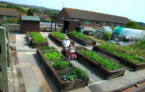 Pictures of sites with plots for gardeners with disabilities