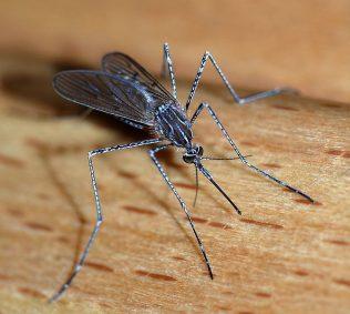 Mosquito Madness