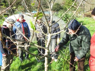 Apple Tree Workshops