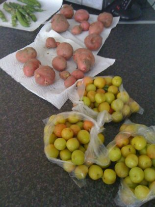 Plums and potatoes.