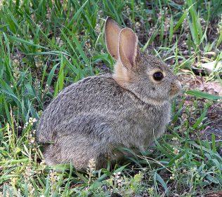 Rabbit | Larry D Moore