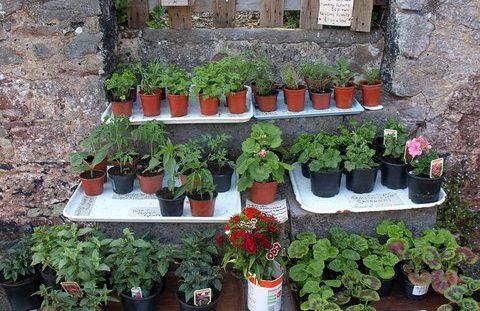 Hove Gardening Club