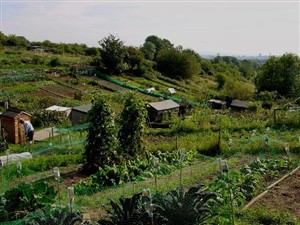 Roedale Valley Allotments | Simon Tobitt