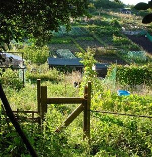 Roedale Allotments and Garden Society