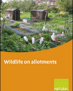 Wildlife on Allotments
